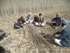 Dividing up cuttings in Bamyan Province